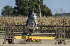 Woman jumping grey gelding; Horse Show. Woman jumping grey gelding over a verticle at a show Royalty Free Stock Photo