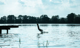 Woman jumping into the lake Stock Photography