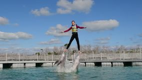 Woman jumping out of the water with dolphins, swimming with dolphins stock video