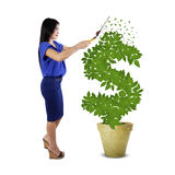 Woman keep the money tree growth Stock Images