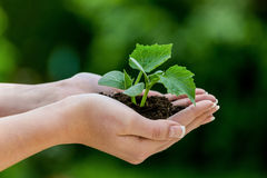 Woman keeps plant in hand Stock Photos