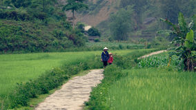 Woman and kid walking through rice fields  Royalty Free Stock Images