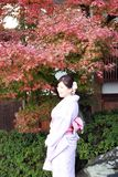 Woman in Kimono dress and pink sash standing with background red leaves in autumn garden at Kiyomizu temple. Higashiyama, Kyoto, Japan, November 17, 2017 Stock Photography