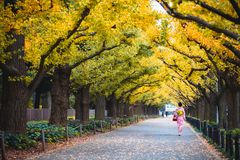 Woman in kimono walking along. An avenue lined with ginkgo trees royalty free stock photo