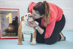 Woman kissing a winner British Bulldog Royalty Free Stock Photo