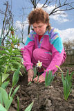 Woman on a kitchen garden Royalty Free Stock Photos