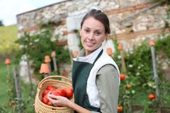 Woman in kitchen garden holdig tomatoes Stock Images