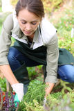 Woman kneeling in garden Royalty Free Stock Photography