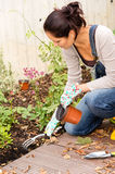 Woman kneeling planting flowerbed autumn garden Royalty Free Stock Photos
