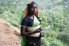 A woman with a knife to collect tea. Sri-Lanka. A woman from Sri Lanka  on the way of coming back after work, holding  a knife to collect tea Royalty Free Stock Image
