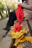 The woman knits in the autumn park on a bench. Skeins of yarn and yellow leaves in the foreground Stock Image