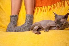 Woman in knitted socks on the sofa with sphinx cat Royalty Free Stock Image