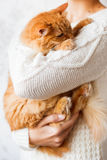 Woman in knitted sweater holding dozing ginger cat. Stock Image