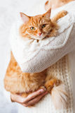 Woman in knitted sweater holding ginger cat. Royalty Free Stock Photos