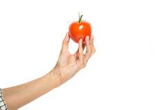 Woman& x27 ; la main de s juge la tomate d'isolement sur le blanc Image stock