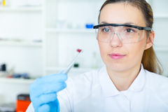 Woman laboratory assistant in the laboratory of food quality.  Royalty Free Stock Image