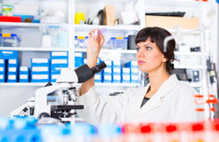 Woman in a laboratory microscope. With microscope slide in hand Stock Photography