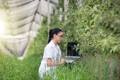 Woman with laptop in apple orchard Royalty Free Stock Photography