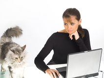 Woman with laptop and cat Royalty Free Stock Image