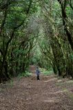 Woman in a laurel forest. Garajonay National Park. La Gomera. Canary Islands. Spain stock photography