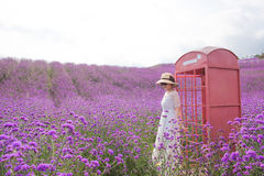 Woman in Lavender Field with backlight Stock Images