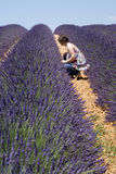 Woman in lavender field Stock Photography