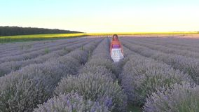 Woman on lavender field stock video footage