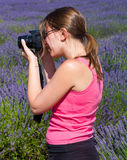 woman among lavender photographing some lavender flowe Royalty Free Stock Photography