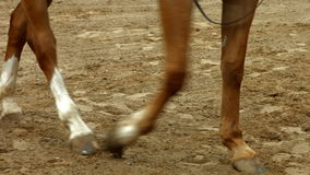 Woman leading her horse in paddock stock video footage