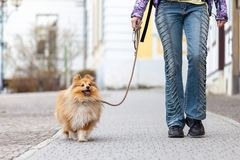 Woman leads her dog on a leash