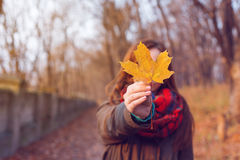 Woman leaf in hand royalty free stock photography