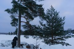 The woman leaned against the pine tree and admires the beauty of the Gulf of Finland VYBORG, RUSSIA 05.01.2019 Park-like royalty free stock images