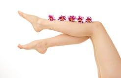 Woman leg Stock Photography