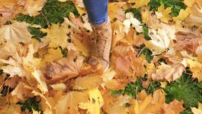 Woman Legs In Boots Close Up Go Through The Green Lawn With Yellow Fallen Leaves. Close-up of women`s feet in jeans and beige boots walking on the green grass stock footage