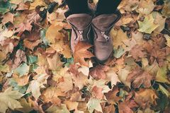 Woman legs in brown shoes against autumn leaves background.  Stock Image
