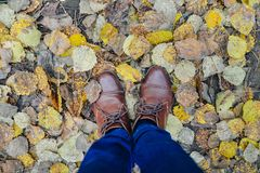 Woman legs in brown shoes against autumn leaves background Stock Images