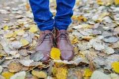 Woman legs in brown shoes against autumn leaves background Stock Image