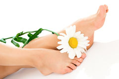 Woman legs with camomile stock images