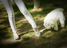 Woman legs with dog Stock Photos