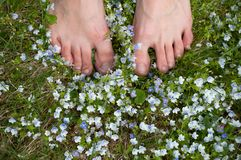 Woman legs on a field with little blue flowers. Woman bare feet on the spring grass and flowers field. Top view scene stock photography