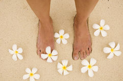 Woman legs with flowers Royalty Free Stock Images