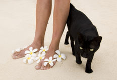 Woman legs with flowers and black cat Stock Photography