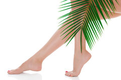 Woman legs and green palm bough Stock Image
