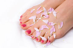 Woman legs in lilac petals Royalty Free Stock Image