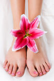 Woman legs with pink lily Stock Photos