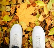 Part of body people autumn concept. legs in the park. Woman has blue jeans royalty free stock images