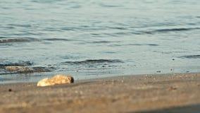 Woman legs walking on golden sand beach. 4K. UHD stock video