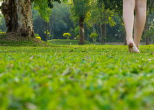 Woman legs walking. On green grass Stock Photography