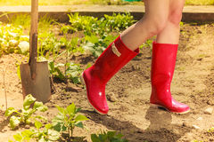 Woman legs wearing red rubber boots in garden Royalty Free Stock Photos