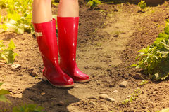 Woman legs wearing red rubber boots in garden Stock Photography